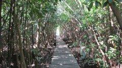 mangrove-trail.jpg
