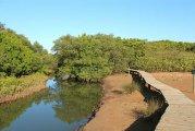 uMngeni geführte Natur- und Wanderwege (Mangroven)